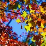 Consigli per i romani: cosa mangiare in autunno