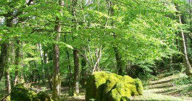Località La Selva Cori - vendita materiale legnoso