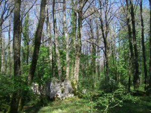 Località La Selva Cori