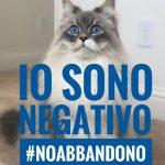 Negativo il test sul gatto di Anzio di proprietà di un paziente Covid 19