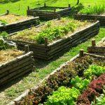 Tutti i benefici dell'orto in affitto