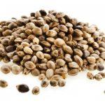 I semi di cannabis sono una fonte proteica compelta: ecco perché
