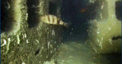 Torvaianica: barriere artificiali contro la pesca a strascico