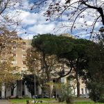 700 nuovi alberi per piazza dei Navigatori e vie limitrofe