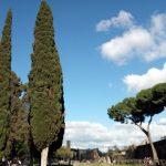 Completamento riqualificazione dei giardini di viale Carlo Felice