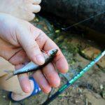 Arriva la rivoluzione dell'urban fishing