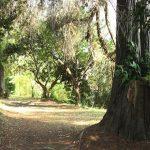 Parco della Cellulosa è ora proprietà di Roma Capitale
