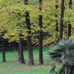 Maxi-appalto da 60 milioni per la cura degli alberi
