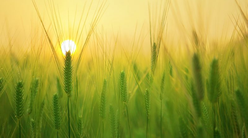 agricoltura - Foto di kangbch da Pixabay
