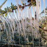 Gelo danneggia fino al 50% di frutta e verdura: Roma e Viterbo maggiormente colpite
