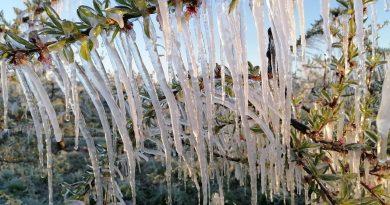 danni gelo Lazio