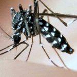 Ordinanza anti-zanzara tigre 2021, le norme per i privati a Roma