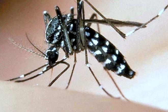 zanzara tigre - ph ufficio stampa comune di roma